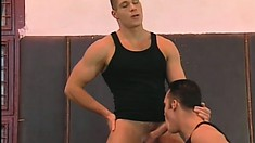 Three handsome gymnasts work each other out with their cocks